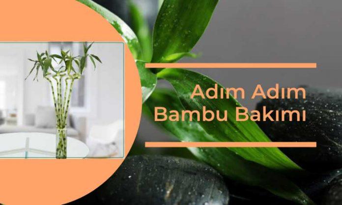 Adım Adım Bambu Çiçeği Bakımı