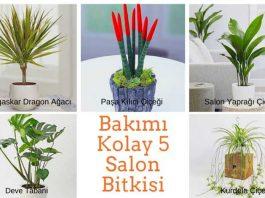 Bakımı Kolay 5 Salon Bitkileri Nelerdir
